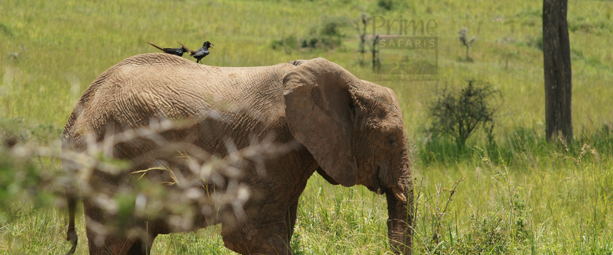 Wildlife Safaris Congo