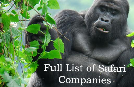 Safari Companies Congo