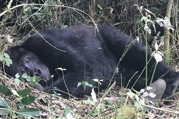 2 Days Congo Gorilla Safari to Virunga National Park