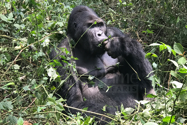 7 Days Congo Wildlife Safari