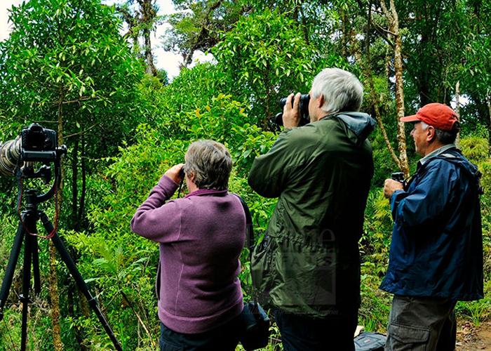 Bird Watching Congo