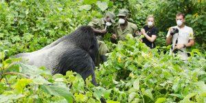 6 Days Congo gorilla safari & Nyiragongo hiking safari tour